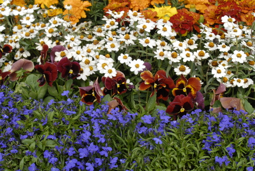 10 Best Bedding Plants Life is a Garden
