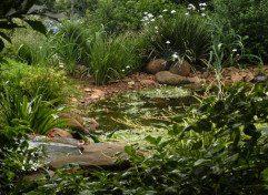 Ponds (3)