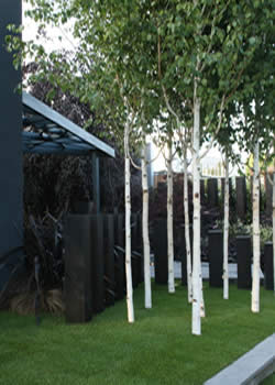 Trees to cool the earth life is a garden for Silver birch trees for small gardens