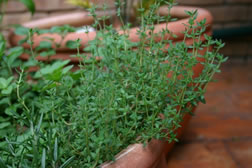 herbs-for-health-3
