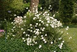 pretty_tough_plants4