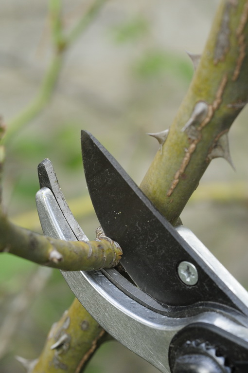 Pruning (2)_resize