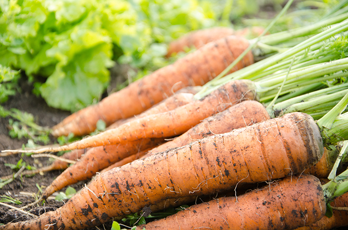 plant-carrots-in-july