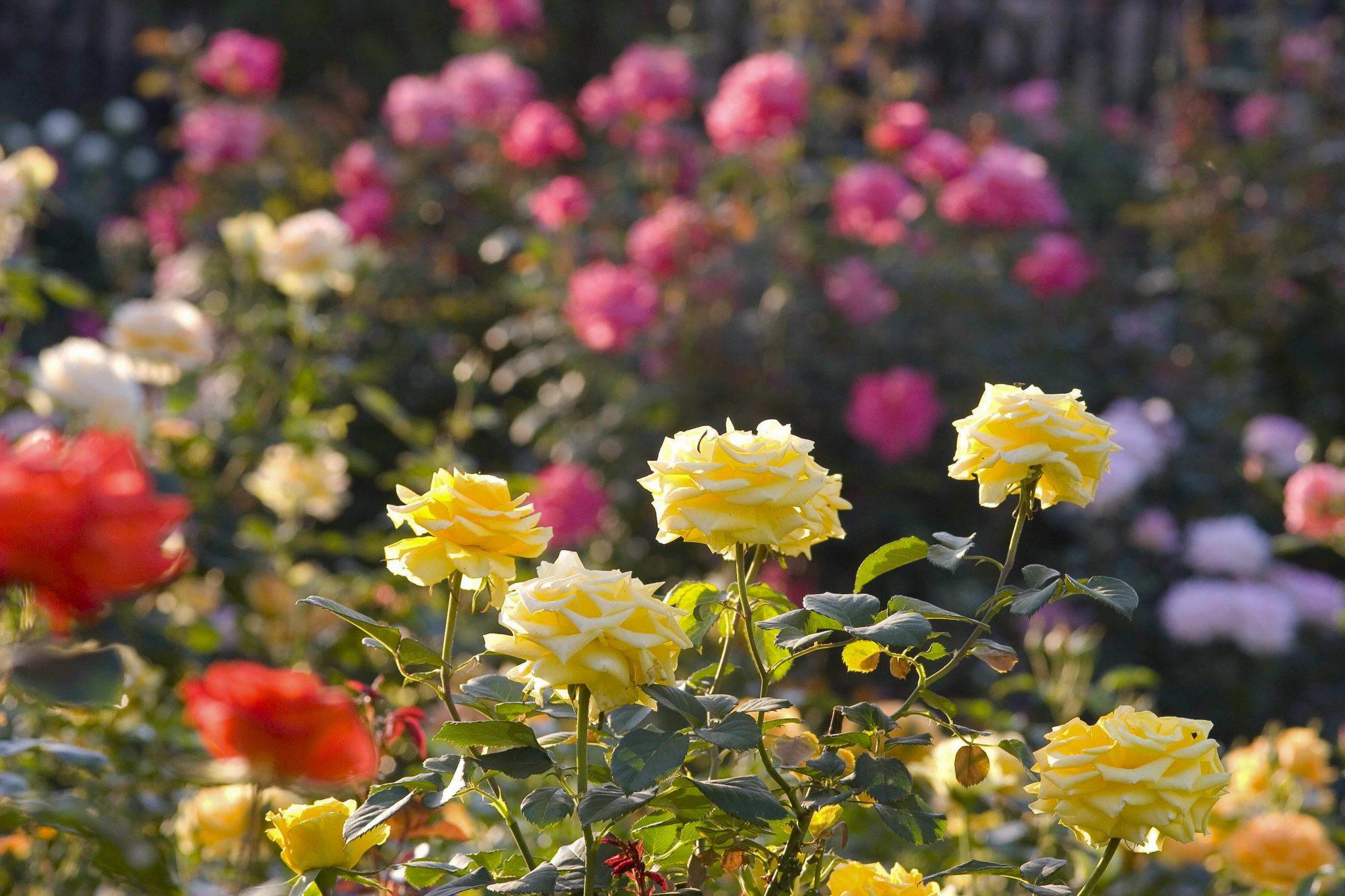 September In The Garden Life Is A Garden