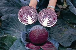 unusual_and_fun_veg_for_the_garden1