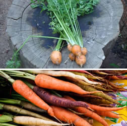 unusual_and_fun_veg_for_the_garden9