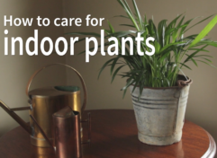 ravishing house plants care. How to Care for Indoor Plants Read more here Archives  Life is a Garden