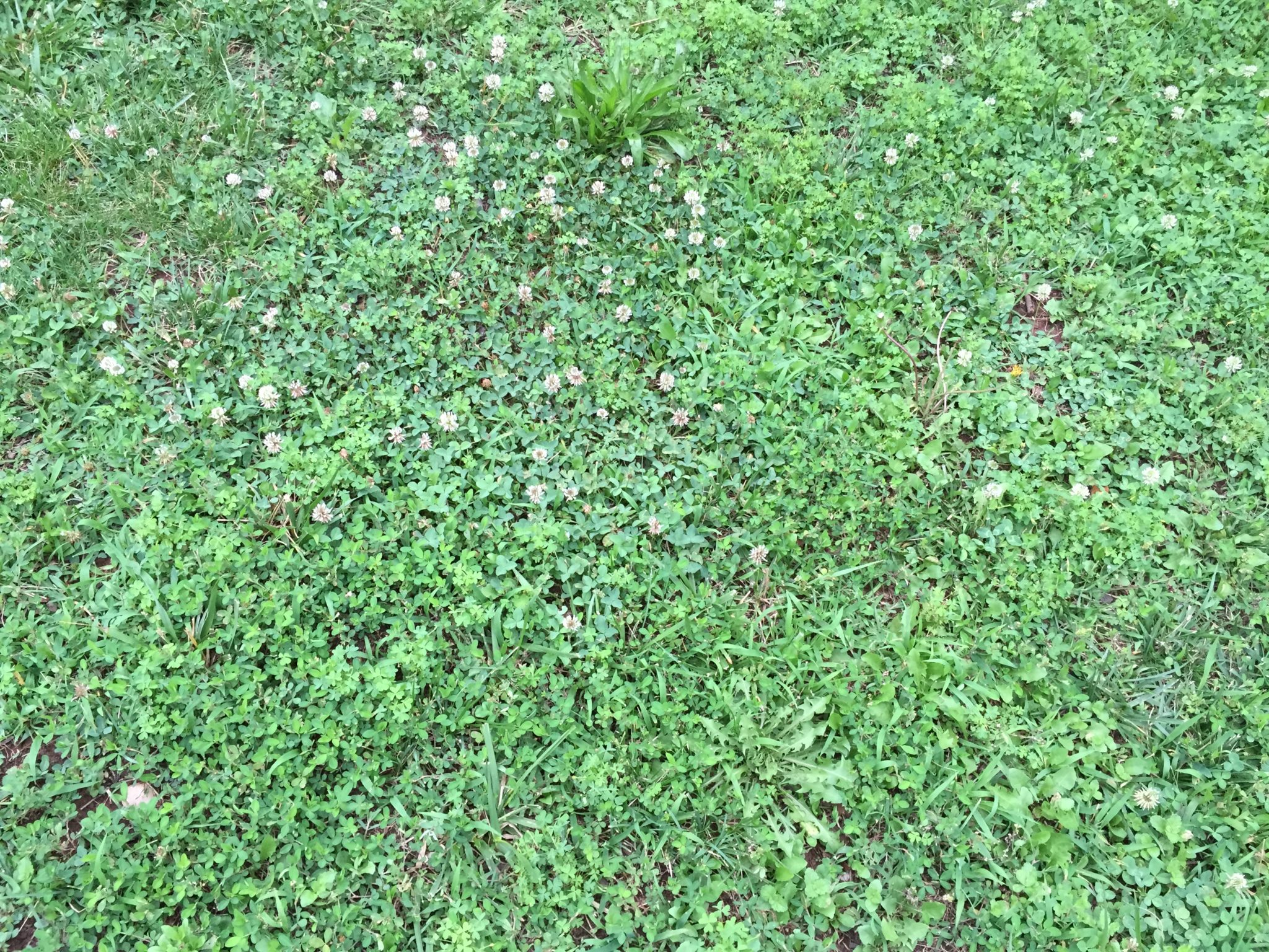 How To Deal With Lawn Weeds Life Is A Garden