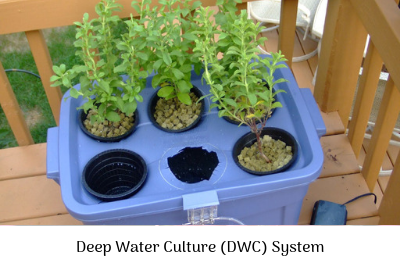 A beginner's guide to Hydroponics gardening | Waterhouse on