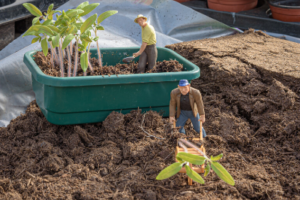 Life is a Garden – Must Love Gardening Level up your little green thumbs