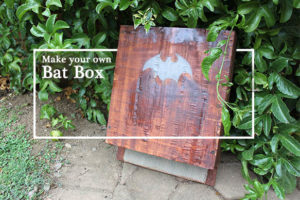 Life is a Garden Build a Bat Box for Daddy