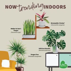 Life is a Garden - Trending Indoor plants