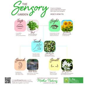 Sensory Garden Infographic