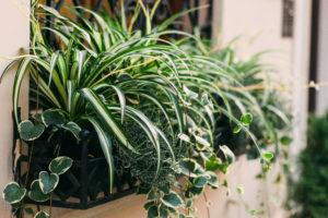 Life is a garden balcony garden