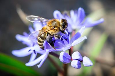 Life_is_a_Garden_OCTBeeFriendly-Bee1