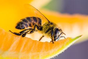 Life_is_a_Garden_OCTBeeFriendly-Bee4