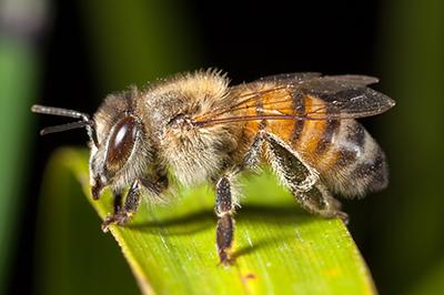 Life_is_a_Garden_OCTBeeFriendly-Bee5