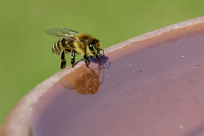 Life_is_a_Garden_OCTBeeFriendly-Bee7