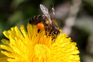 Life_is_a_Garden_OCTBeeFriendly-Bee8
