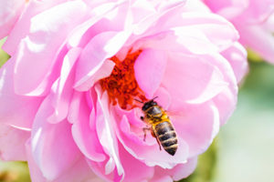 Life_is_a_Garden_OCTBeeFriendly-Bee9