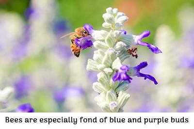 Life_is_a_Garden_OCTBeeFriendly-Plant12