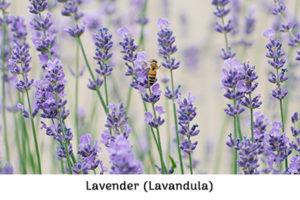Life_is_a_Garden_OCTBeeFriendly-Plant3