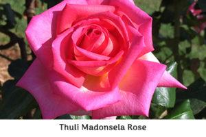 Life_is_a_Garden_OCT-InTheGarden-Rose2