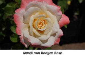 Life_is_a_Garden_OCT-InTheGarden-Rose3