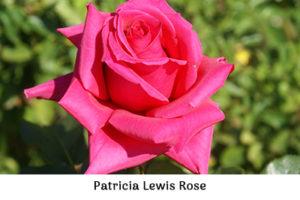 Life_is_a_Garden_OCT-InTheGarden-Rose4