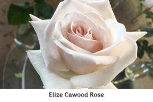 Life_is_a_Garden_OCT-InTheGarden-Rose5