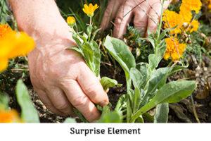 Life is a Garden – A War on Weeds