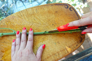 DIY colour bouquet