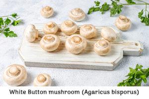 Bottom mushroom