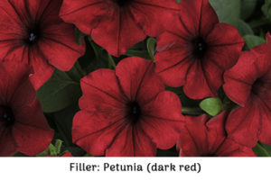 Filler petunia