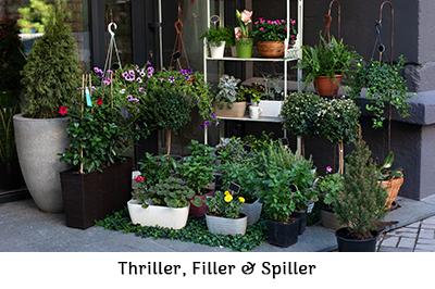 Thriller, Filler & Spiller