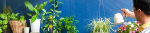 Patio Gardening