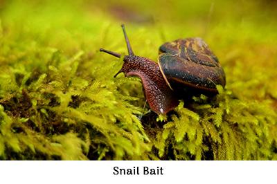 Snail Bait