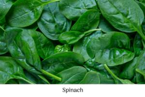 Spinach, February checklist