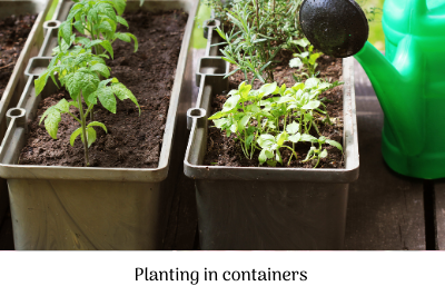 Planting in containers