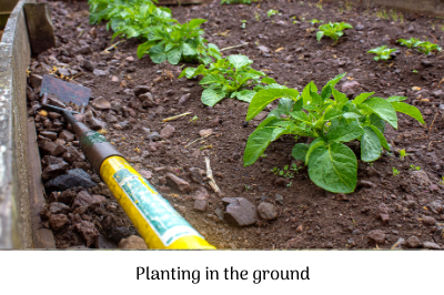 Planting in the ground