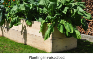 Planting in raised beds