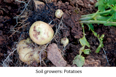 Soil growers - potatoes