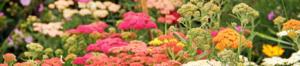 March Gardening Checklist