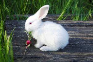 Grow radish in 25 days