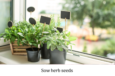 Sow herb seeds