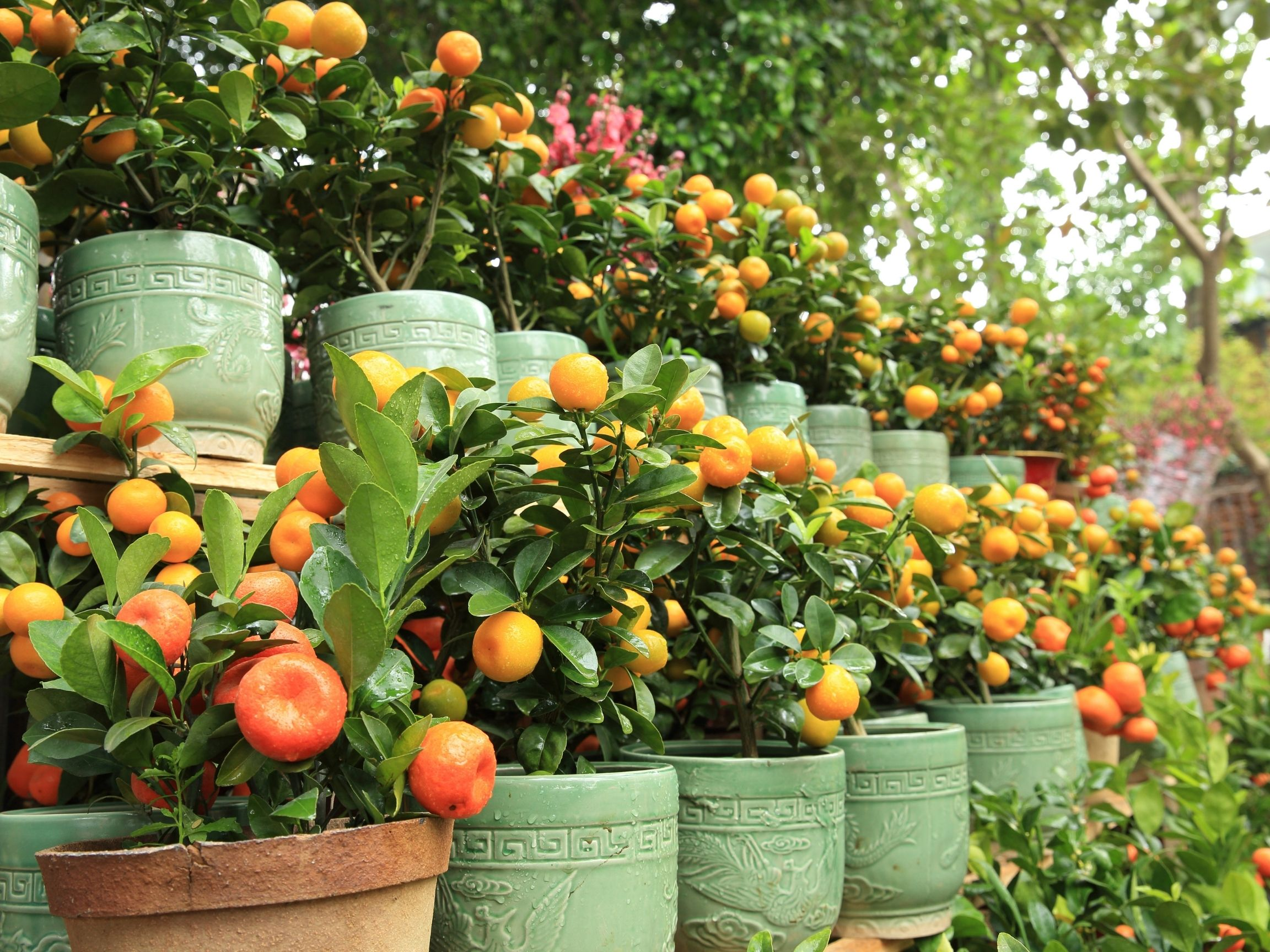 Life is a Garden - Trees in pots